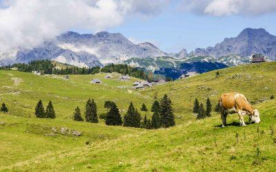 (R)estate in Malga: i formaggi di alpeggio da gustare nel periodo estivo
