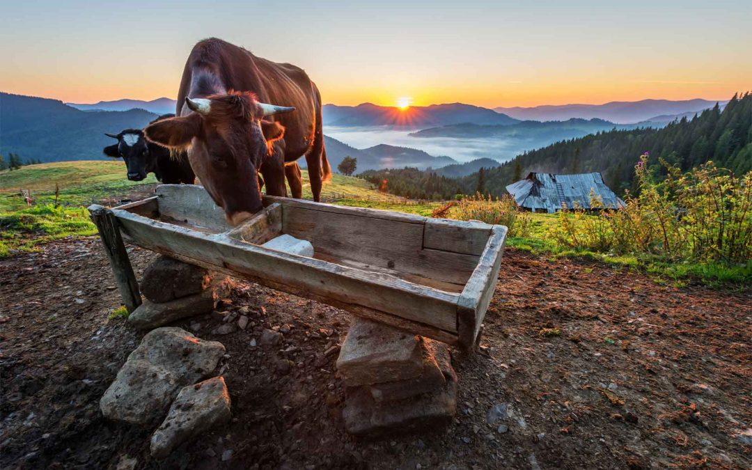La montagna ci fa belli: energia e leggerezza con la Bresaola della Valtellina IGP